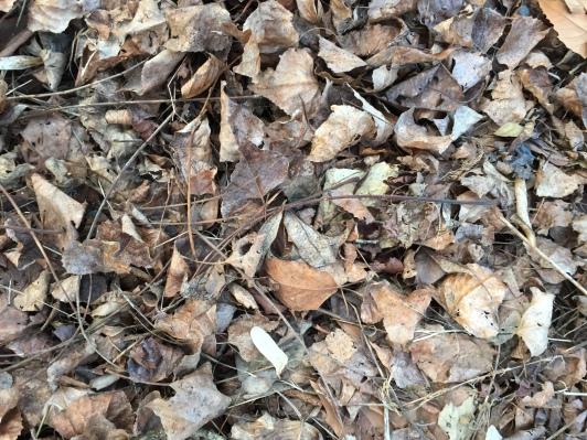 Leaves, millions of leaves